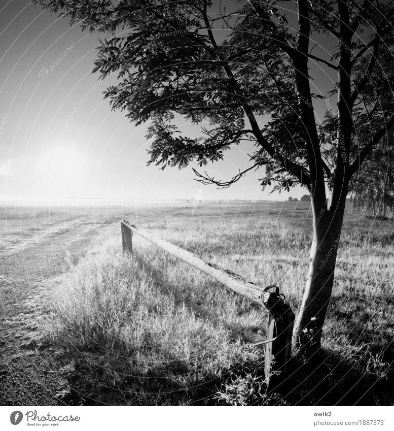 Offene Landschaft Umwelt Natur Pflanze Wolkenloser Himmel Horizont Herbst Klima Schönes Wetter Gras Sträucher Laubbaum Wiese Weide glänzend leuchten stehen