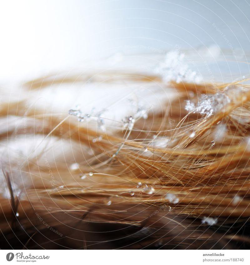 den Winter im Haar Mensch Natur Wasser Ferien & Urlaub & Reisen kalt Schnee Haare & Frisuren Schneefall Eis blond Ausflug Behaarung Wassertropfen Frost