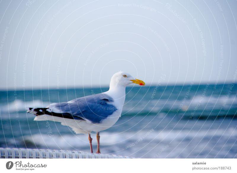 Vorausschauend Wasser Tier Vogel Wellen Küste nah Neugier Wildtier Ostsee Möwe