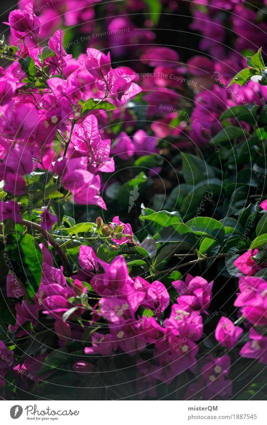 Rosa Blume. Pflanze Kunst rosa ästhetisch mediterran