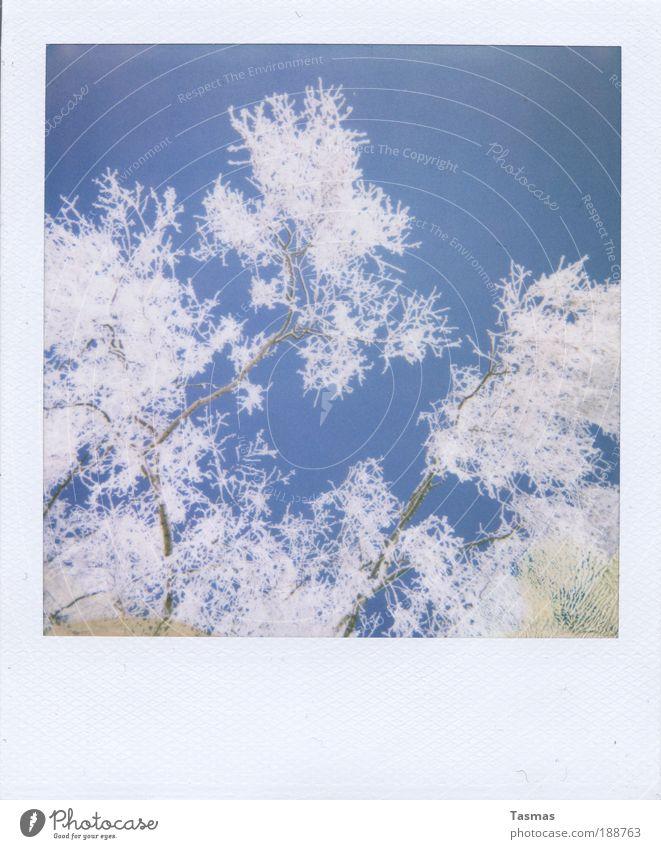 mitgehangen, mitgefangen. Natur Himmel weiß Pflanze Winter ruhig Schnee Zufriedenheit Romantik Ast Vergänglichkeit Verfall Licht Zweig Raureif bezaubernd