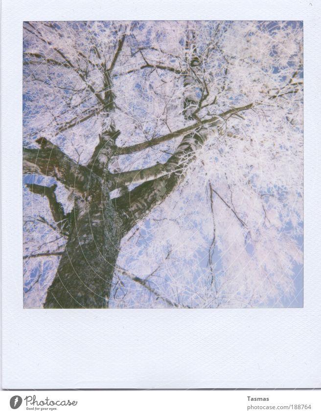 mitgefangen, mitgehangen. Natur Himmel weiß Baum Pflanze Winter ruhig Umwelt Zeit Romantik Ast Vergänglichkeit Raureif bezaubernd Birke