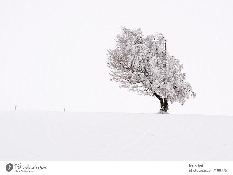 Struwwelpeter Umwelt Natur Landschaft Pflanze Erde Himmel Wolken Horizont Winter Eis Frost Schnee Baum Wiese Berge u. Gebirge braun schwarz weiß Glück Kraft