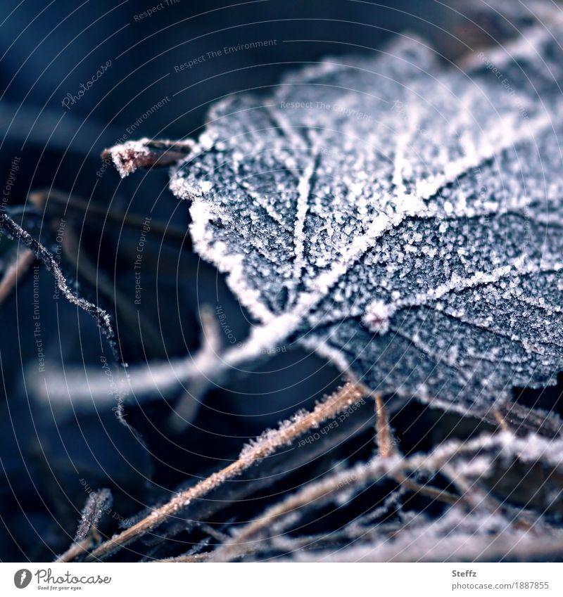 wie ein Blatt vom Baum fällt Raureif Kälteschock Kälteeinbruch winterliche Kälte Wintereinbruch Winterkälte winterliche Stille nordisch Frost Traurigkeit kalt
