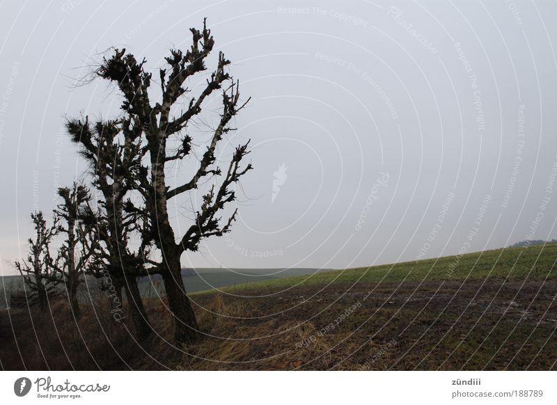 In einer Reihe Natur Landschaft Herbst Baum Baumreihe Wiese Hügel kalt Ende Ewigkeit Freiheit Traurigkeit Sitzreihe sortieren aufgereiht kahl Feld herbstlich