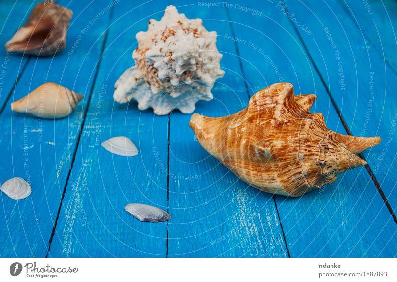 Muscheln auf einem blauen hölzernen Hintergrund schön Ferien & Urlaub & Reisen Sommer Meer Natur Holz alt natürlich tropisch Entwurf Schiffsplanken Panzer marin