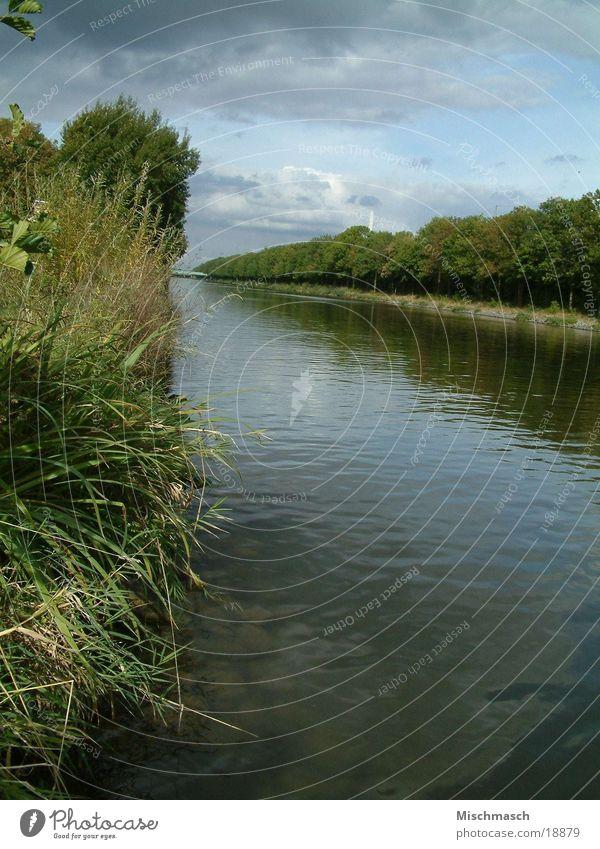 Weser Wasser Fluss Sträucher Abwasserkanal