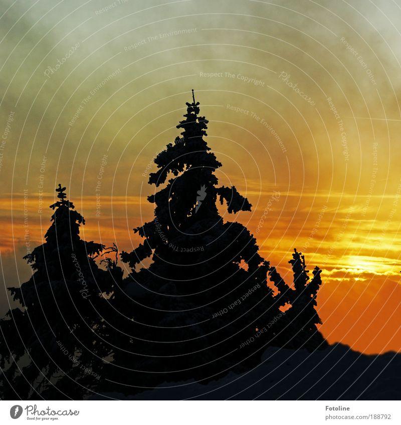 glühender Himmel Umwelt Natur Landschaft Pflanze Urelemente Erde Feuer Luft Wolken Sonne Sommer Herbst Winter Klima Klimawandel Wetter Schönes Wetter Baum Wald