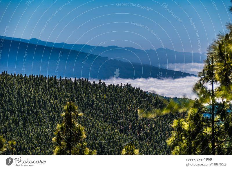 Über den Wolken Ferien & Urlaub & Reisen Ferne Freiheit Sommerurlaub Berge u. Gebirge wandern Landschaft Schönes Wetter Wald Menschenleer atmen Erholung