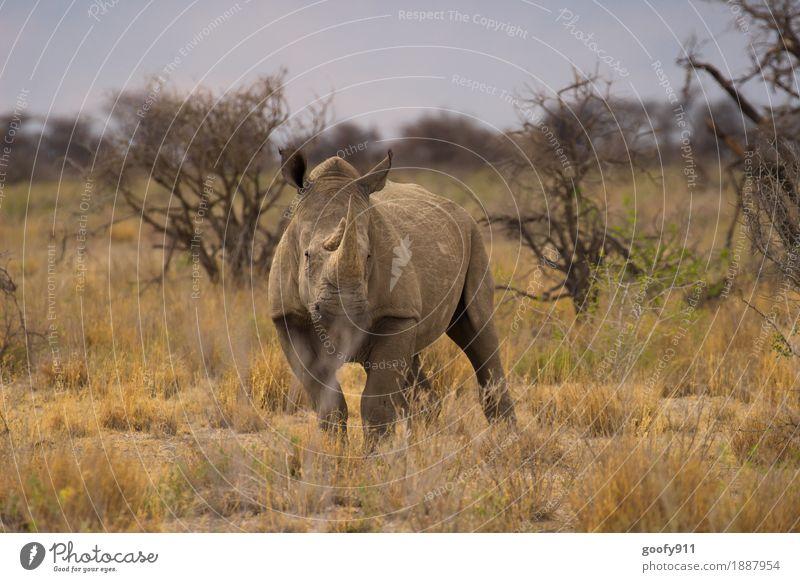 Nashorn 1 Himmel Natur Ferien & Urlaub & Reisen Sommer Sonne Baum Landschaft Tier Ferne Umwelt Frühling grau Ausflug Wildtier Sträucher stehen
