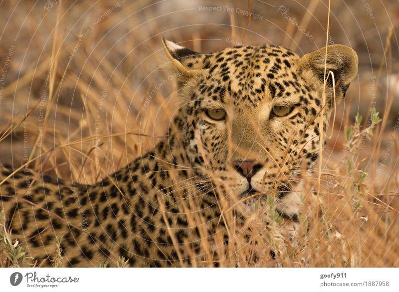 Blickkontakt Katze Natur Ferien & Urlaub & Reisen Sommer schön Landschaft Tier Ferne schwarz Umwelt gelb Frühling wild Ausflug elegant Wildtier