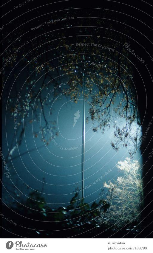 einsame Laterne Natur Baum Wald Herbst dunkel Umwelt Park Kunst glänzend hoch Energie authentisch Sicherheit leuchten einzigartig dünn
