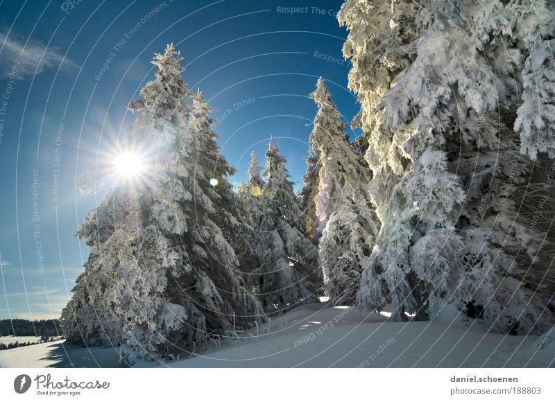Winter für alle, in diesem Jahr !! Natur schön weiß Baum blau Ferien & Urlaub & Reisen Schnee Erholung Landschaft Eis hell Wetter Umwelt Ausflug Frost