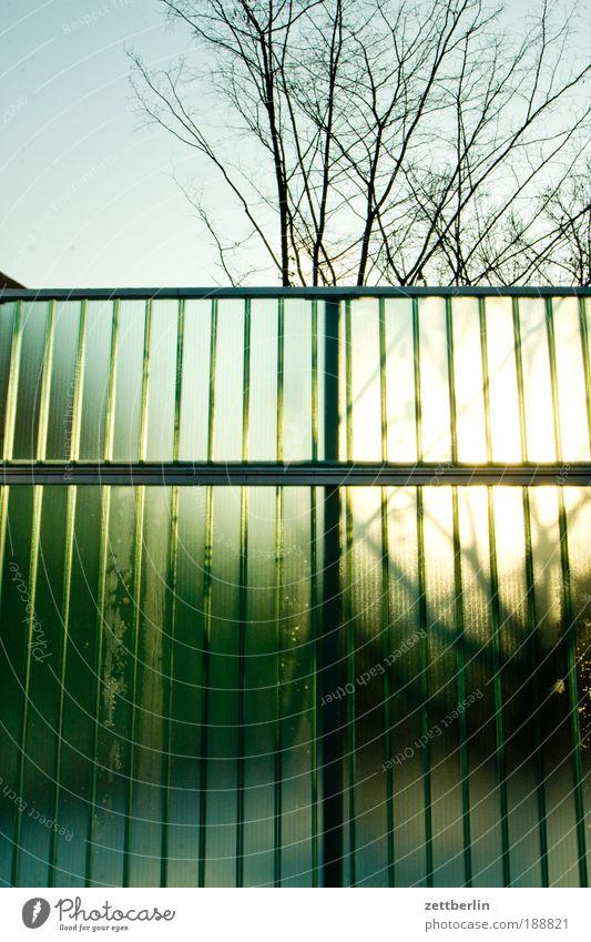 Sonnenaufgang Dezember Zaun Sichtschutz Wellen Bauzaun Grundstück Grenze Baum Klarheit durchsichtig Transparente transluzenz Sonnenlicht