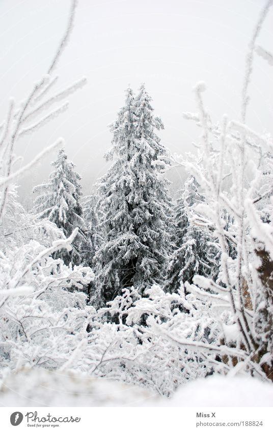 Wipfel Ferien & Urlaub & Reisen Ausflug Winter Schnee Winterurlaub Berge u. Gebirge Umwelt Natur Wolken Klimawandel Wetter schlechtes Wetter Eis Frost Baum Wald