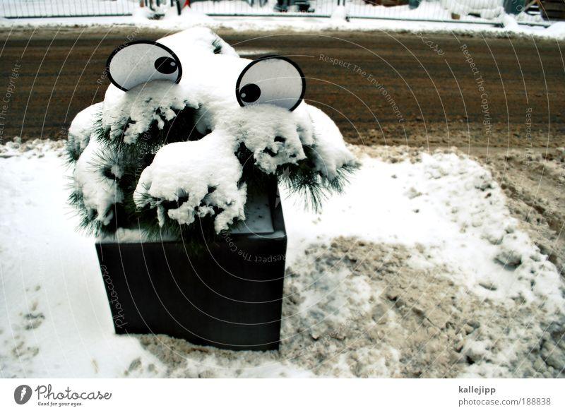 bye-bye, daisy! Gesicht Auge 1 Mensch Umwelt Winter Klimawandel Eis Frost Schnee Pflanze Baum Grünpflanze Topfpflanze Verkehr Verkehrswege Straßenverkehr