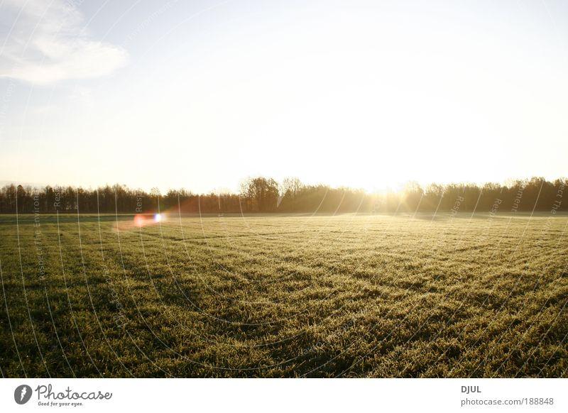 Himmel Natur Ferien & Urlaub & Reisen Pflanze Sonne Sommer Wolken Wald Umwelt Wiese Landschaft kalt Sand Garten träumen Park