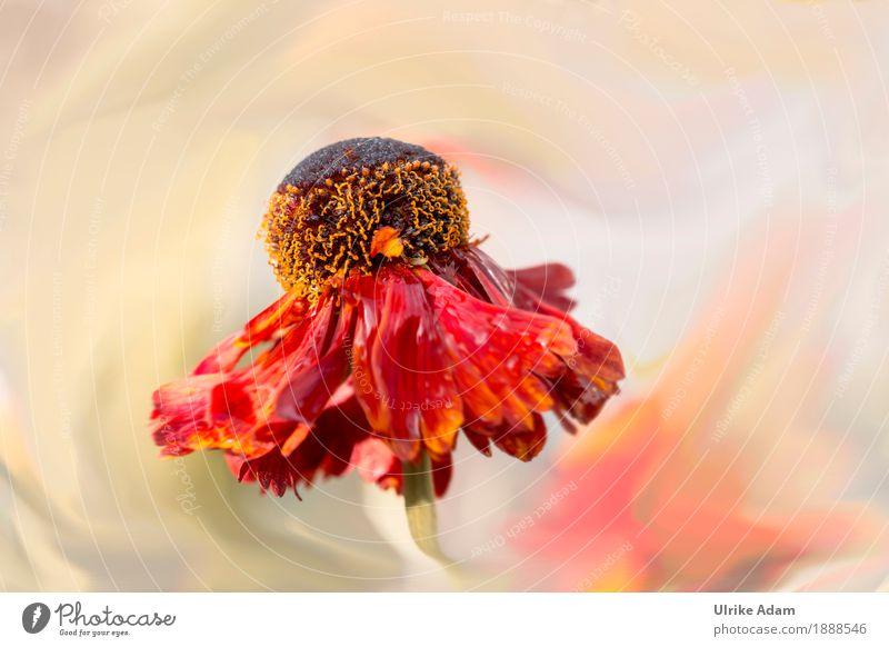 Sommertraum Natur Pflanze Sommer Blume rot Wärme Blüte Innenarchitektur Bewegung Garten Design wild Park Dekoration & Verzierung Geburtstag Wassertropfen