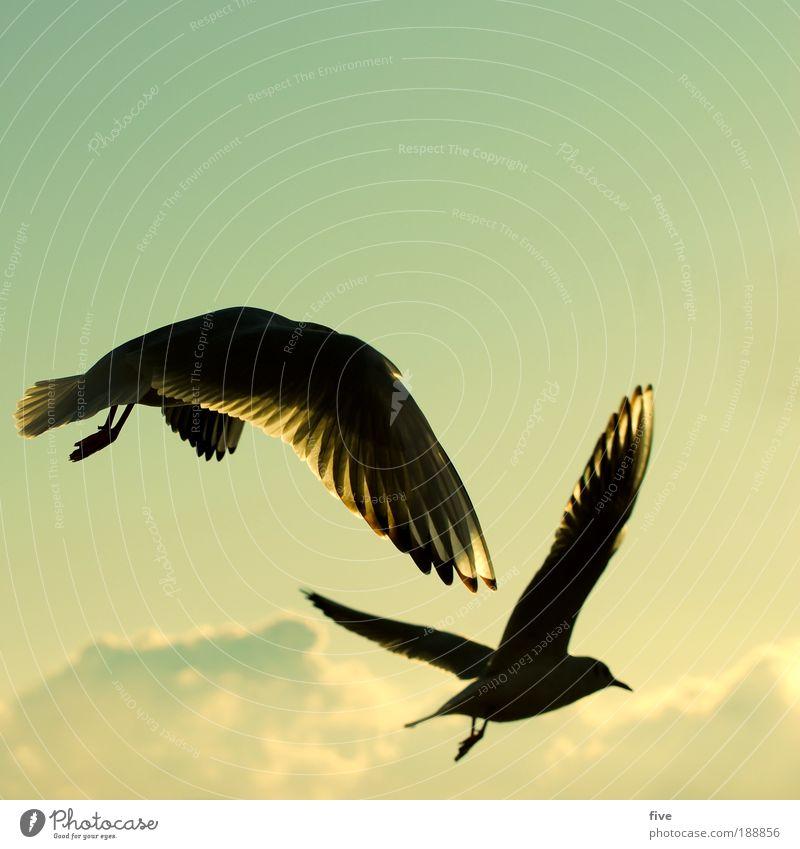 easy going Umwelt Natur Himmel Wolken Tier Vogel Möwe 2 fliegen frei Glück Zufriedenheit Warmherzigkeit Gelassenheit ruhig Sehnsucht Freiheit Flügel Farbfoto