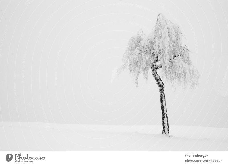 Allein im der weiten weissen Weite Natur Wasser weiß Baum Pflanze Winter ruhig schwarz Wolken dunkel kalt Schnee grau träumen Landschaft Luft