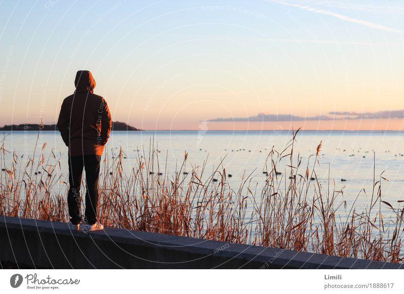 In die Ferne schweifen Mensch Himmel Natur Ferien & Urlaub & Reisen Jugendliche Mann Pflanze Wasser Junger Mann Meer Landschaft Erholung Tier ruhig Erwachsene