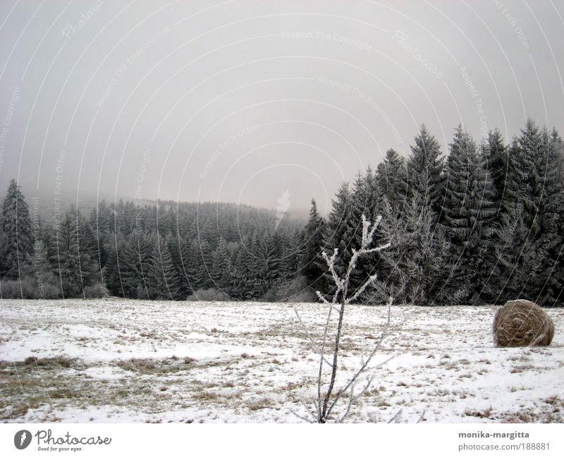 klirrende Kälte Natur Landschaft Erde Himmel Winter Eis Frost Pflanze Baum Heuballen Erholung genießen träumen Ferne frei kalt braun gelb grau Stimmung