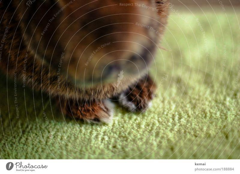Hasenpfoten II grün Tier braun Tierfuß sitzen Bodenbelag Tiergesicht Fell Perspektive Hase & Kaninchen Pfote Haustier Teppich Krallen Tierliebe