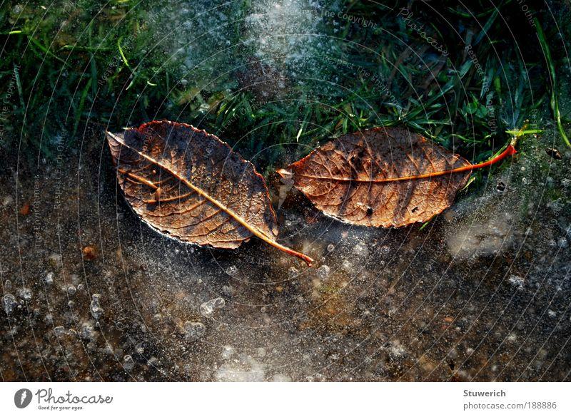 Eisige Blätter grün Pflanze Blatt Landschaft Zufriedenheit braun Feld Erde ästhetisch Frost authentisch Lebensfreude außergewöhnlich Begeisterung Originalität