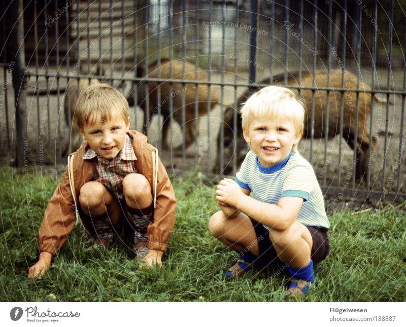 Zwei wilde Schweine Freizeit & Hobby Spielen Junge Geschwister Tier Wildtier außergewöhnlich blond Ferien & Urlaub & Reisen Wildschwein Zoo Gehege Kindheit