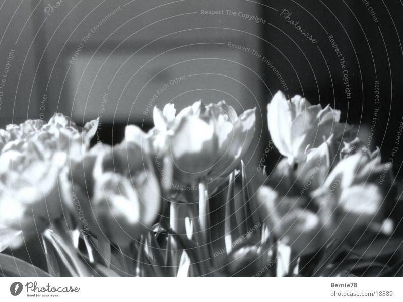 TulpenVase Blume Dekoration & Verzierung Häusliches Leben