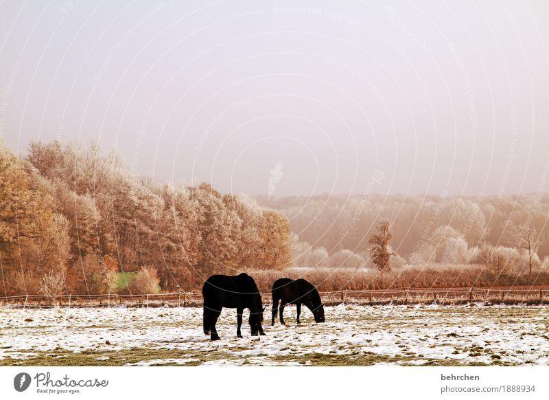 prima klima | wenn mans mag Himmel Wolken Herbst Winter Klima Klimawandel Eis Frost Schnee Schneefall Baum Gras Sträucher Wiese Feld Wald Tier Nutztier Pferd