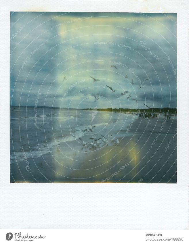 Landschaft und Natur Polaroid zeigt Meer und fliegende Möwen Ferien & Urlaub & Reisen Tourismus Ausflug Freiheit Sommer Strand Wellen Mensch Menschengruppe