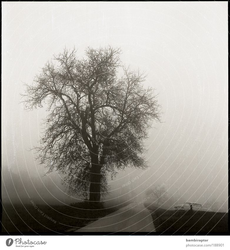 Die Straße Natur Baum Herbst Wiese Wege & Pfade Landschaft Nebel Wetter fahren Umwelt analog Oldtimer