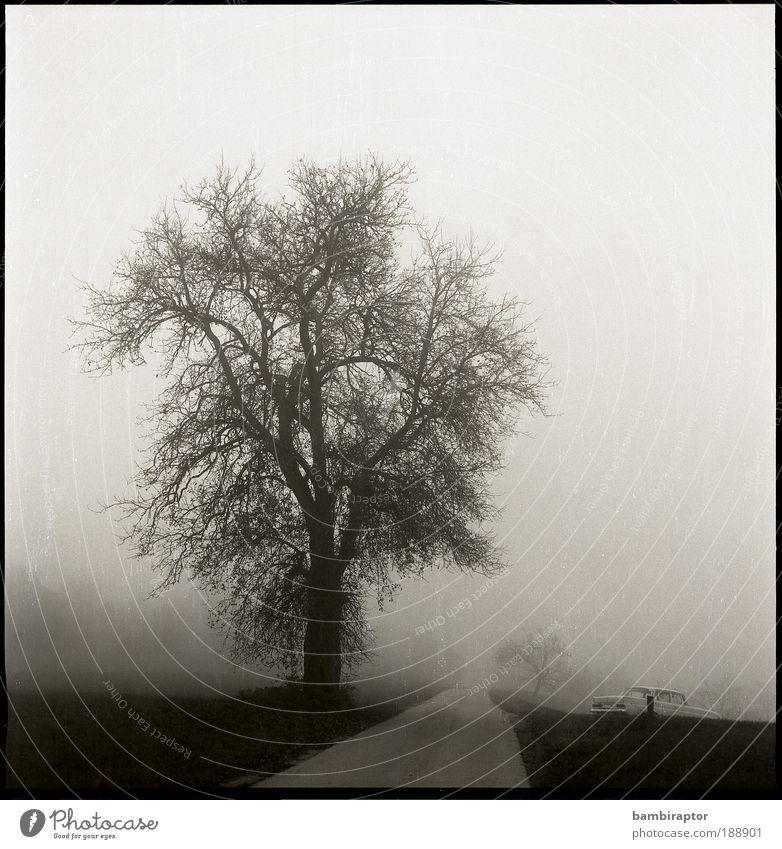Die Straße Natur Landschaft Herbst Wetter Nebel Baum Wege & Pfade Oldtimer fahren analog Wiese Schwarzweißfoto Außenaufnahme Menschenleer Tag Zentralperspektive