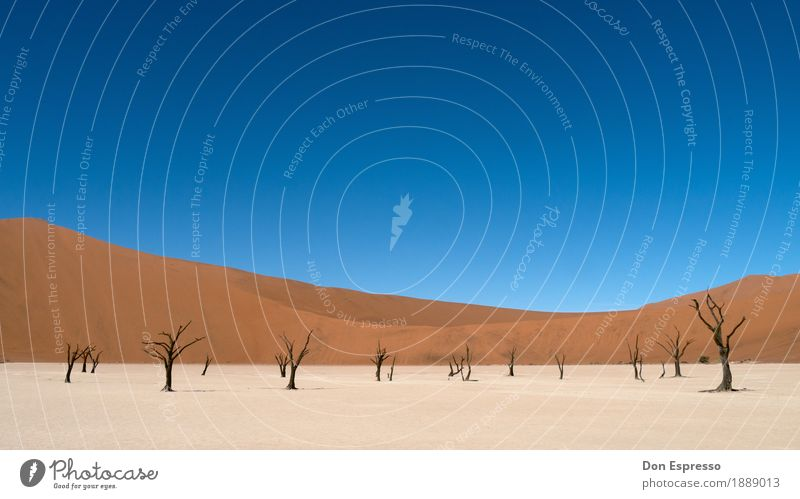 Deadvlei Natur Ferien & Urlaub & Reisen Landschaft Einsamkeit Ferne Wärme Umwelt Zeit Freiheit Sand Tourismus trist Abenteuer Vergänglichkeit trocken Wüste
