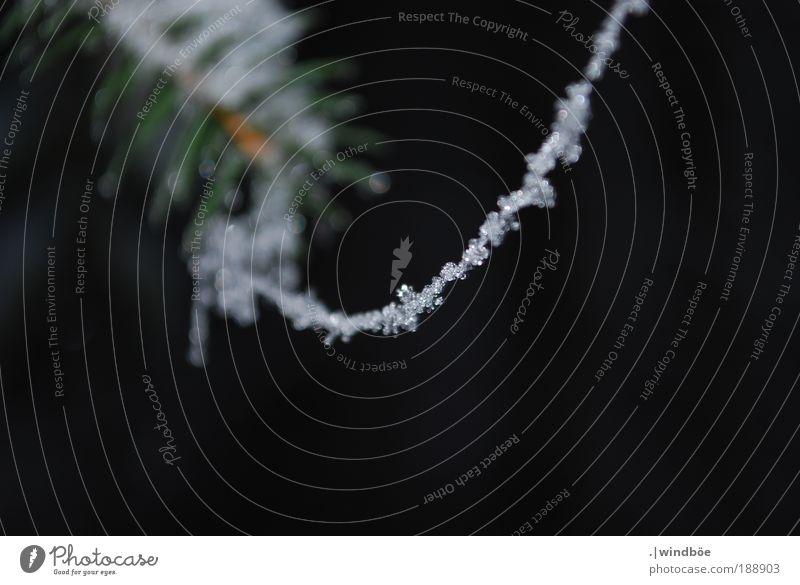 Schneekette (2) Natur Wasser Winter Wetter Eis Frost Pflanze Tanne Blühend hängen hängend Nadel Spinnennetz gefroren Kristalle Kristallstrukturen Kette ruhen