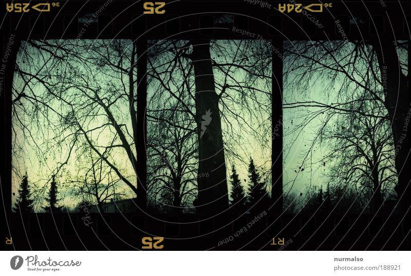 Finster Tannen zum 666sten Freizeit & Hobby Kunst Kultur Subkultur Natur Landschaft Pflanze Winter schlechtes Wetter Baum Park Wald Menschenleer schreien