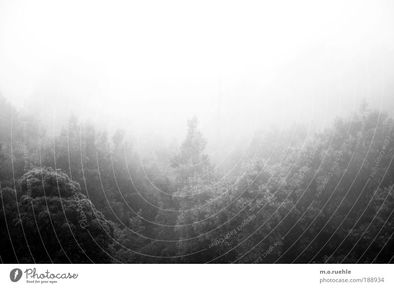 Fühlland Umwelt Natur Landschaft Luft Nebel Baum Wald Mischwald ästhetisch kalt natürlich Sauberkeit wild weich silber Stimmung schön Reinheit Sehnsucht