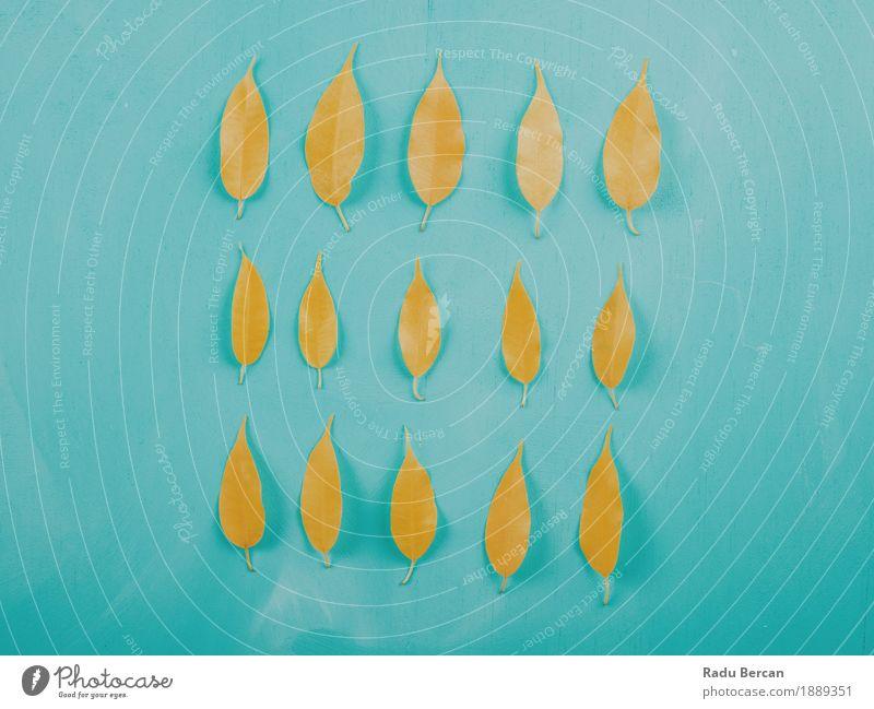Gelber Herbstlaub auf Türkis-hölzerner Tabelle Dekoration & Verzierung Tisch Umwelt Natur Pflanze Blatt Holz natürlich blau mehrfarbig gelb türkis Gefühle Farbe