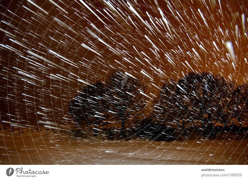 Schneesturm Himmel Natur Baum Winter Einsamkeit kalt Landschaft Schneefall Wetter Eis Langzeitbelichtung Frost Urelemente außergewöhnlich Sturm