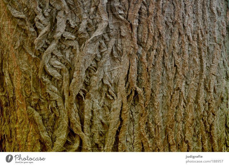 Haut Natur alt Baum Pflanze Holz braun Kraft Haut Baumstamm Schutz einzigartig natürlich trocken Baumrinde rau