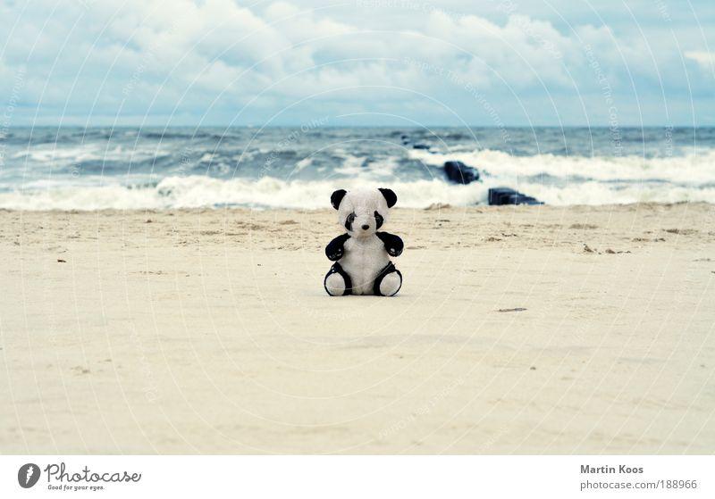 return to innocence Natur Bär schön Meer Strand Ferien & Urlaub & Reisen Tier Einsamkeit Spielen klein Ausflug Vertrauen Spielzeug Kindheit niedlich