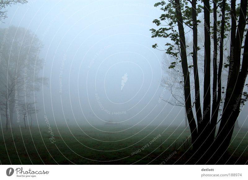 Wolkenkuckuckshain Baum ruhig Einsamkeit Wald Herbst Wiese Park Landschaft Stimmung Nebel Romantik Sehnsucht Gelassenheit Fernweh Heimweh achtsam