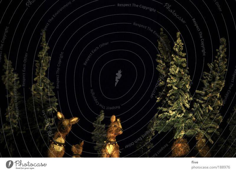 wir sind hier wohl zu spät...? Natur Weihnachten & Advent Baum Pflanze Winter schwarz Tier dunkel kalt warten Umwelt Tiergruppe Tanne Rentier