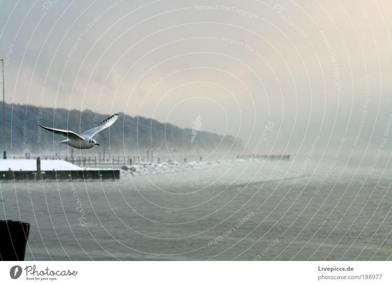 Hafenmöve im Nebel Natur Wasser Winter Tier kalt Landschaft Eis Vogel Nebel Frost Insel Flügel Wildtier Seeufer Mole