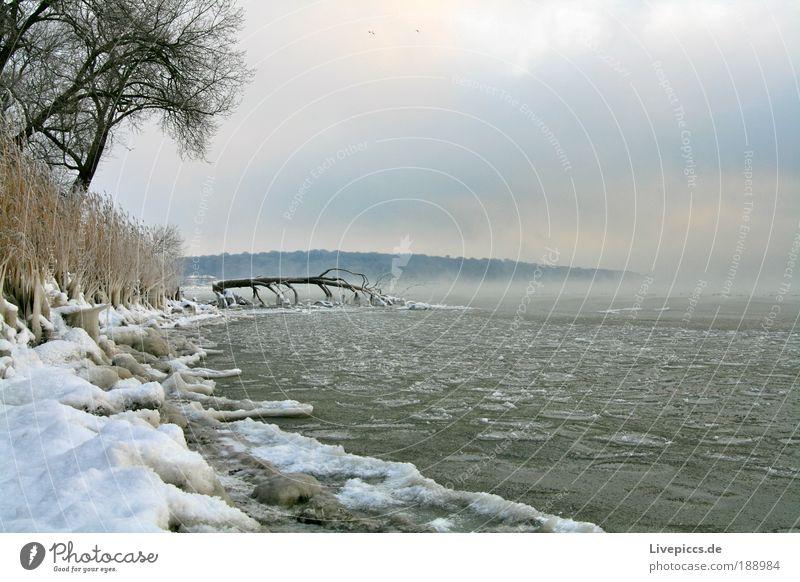vereiste Bucht Natur Wasser Baum Pflanze Winter kalt Schnee Landschaft Eis Küste Nebel Umwelt Coolness Frost außergewöhnlich
