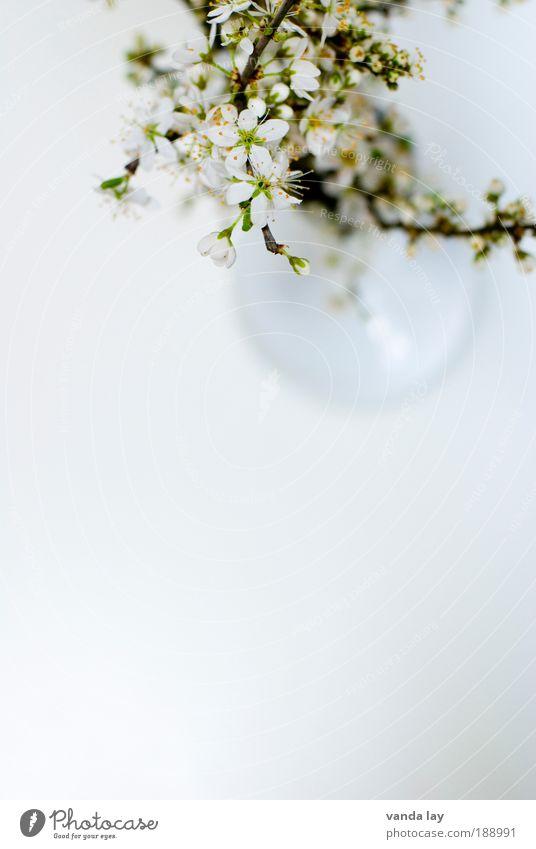 Frühlingsgruß weiß Baum Blume grün Pflanze Blatt Stil Blüte Wohnung Design Möbel elegant Tisch Lifestyle Dekoration & Verzierung
