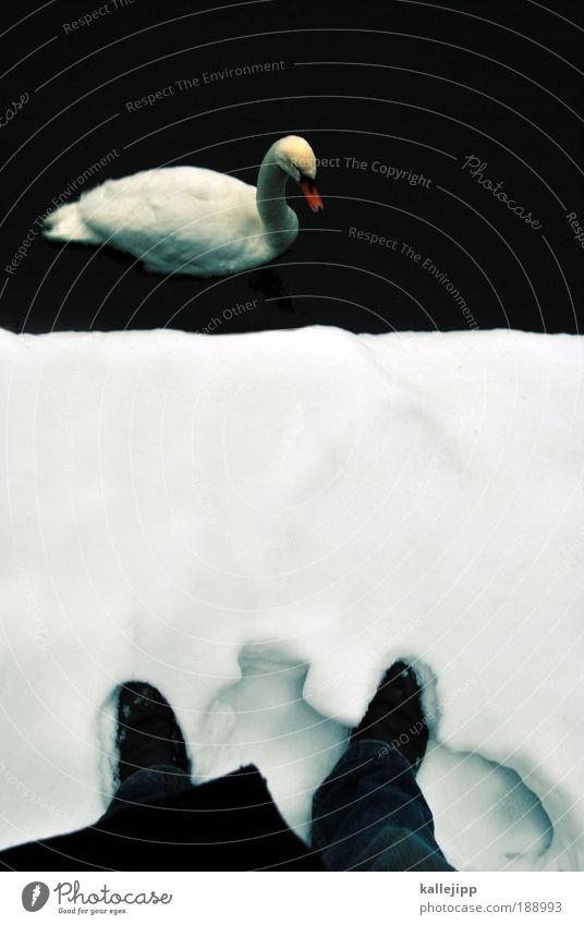 cold diamond Mensch maskulin Mann Erwachsene Beine Fuß 1 Umwelt Natur Wasser Winter Eis Frost Schnee Küste Seeufer Flussufer Teich Tier Vogel weiß Stolz Schwan
