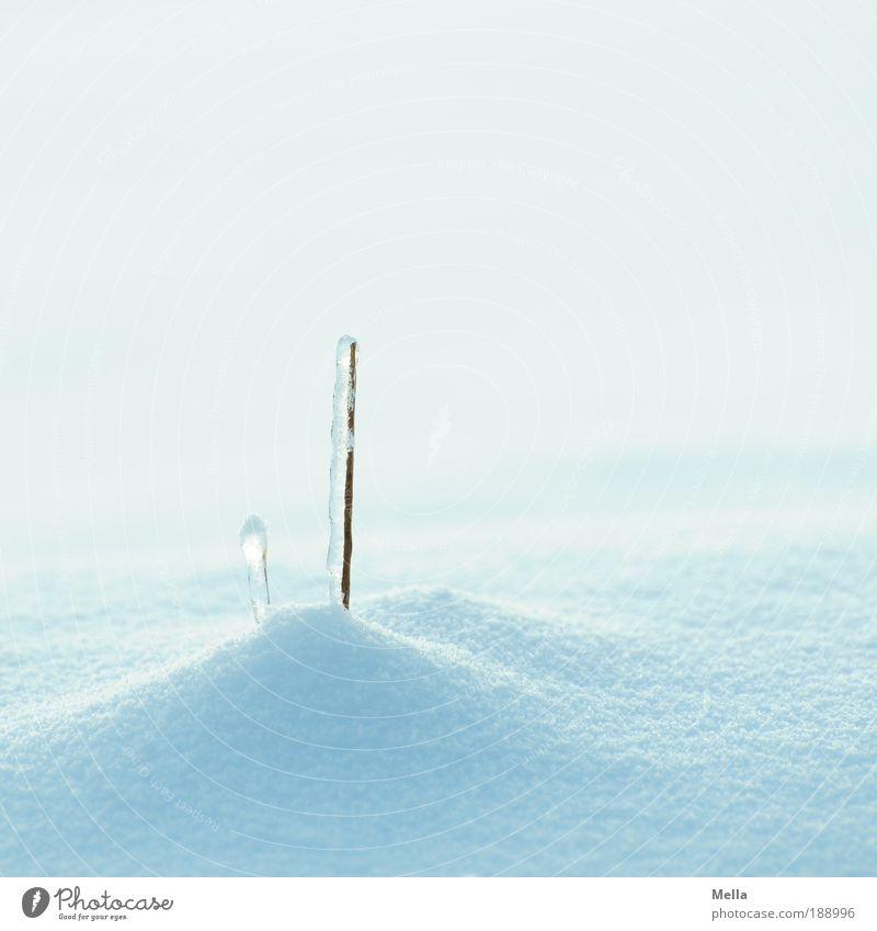 Schneewelten Umwelt Natur Winter Klima Klimawandel Wetter Eis Frost Pflanze Gras stehen Wachstum hell kalt natürlich blau weiß Reinheit rein ruhig Farbfoto