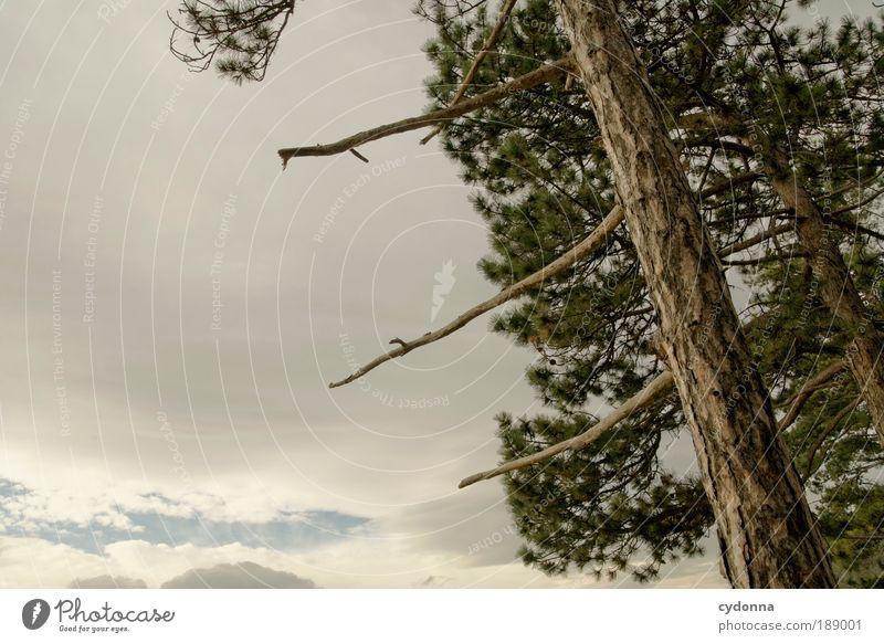 Berührung Himmel Natur Baum Wolken ruhig Ferne Wald Erholung Leben Freiheit Umwelt Bewegung träumen Luft Wetter Zufriedenheit